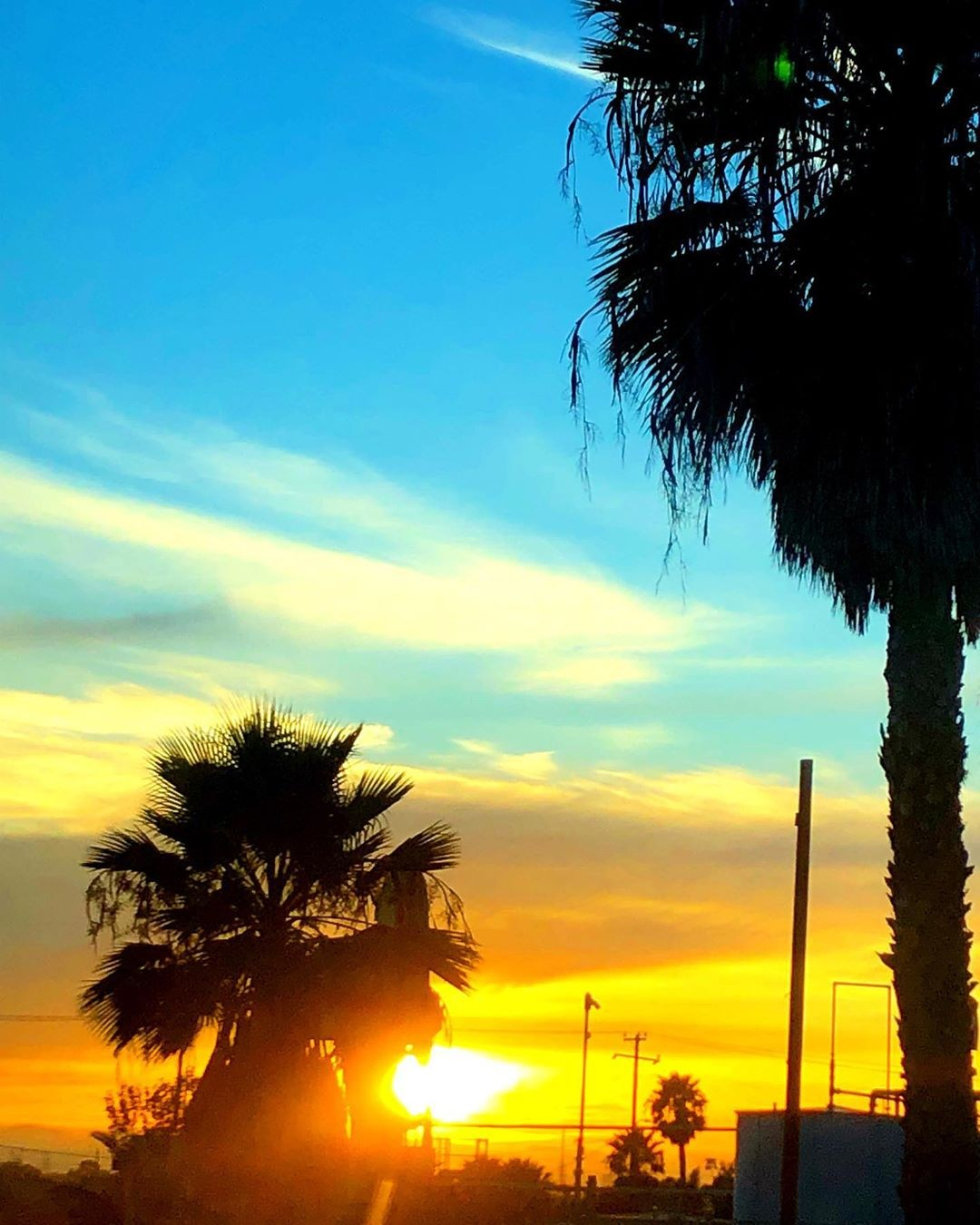 Sundown palms in the …