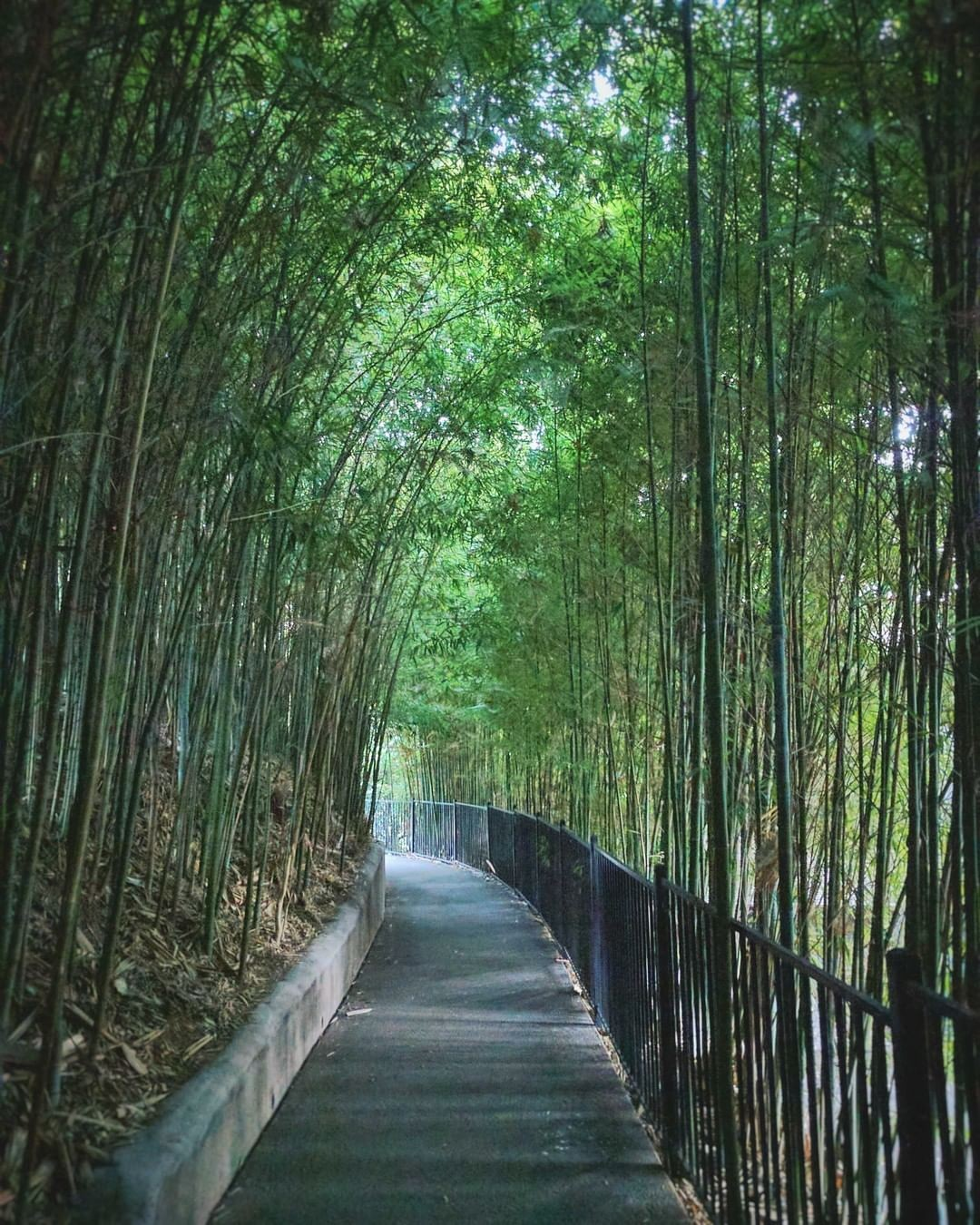 Walk through the bamboo …